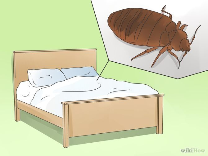 How to Prevent Bed Bugs #pestcontrol