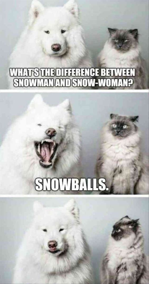 Genießen Sie amüsante Haustier Meme, die aus Haustier Katze Meme … – Healthy Skin Care