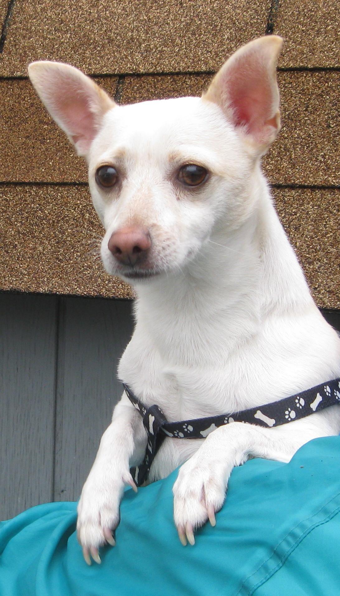 Adopt on Animal rescue, Animals, Pets