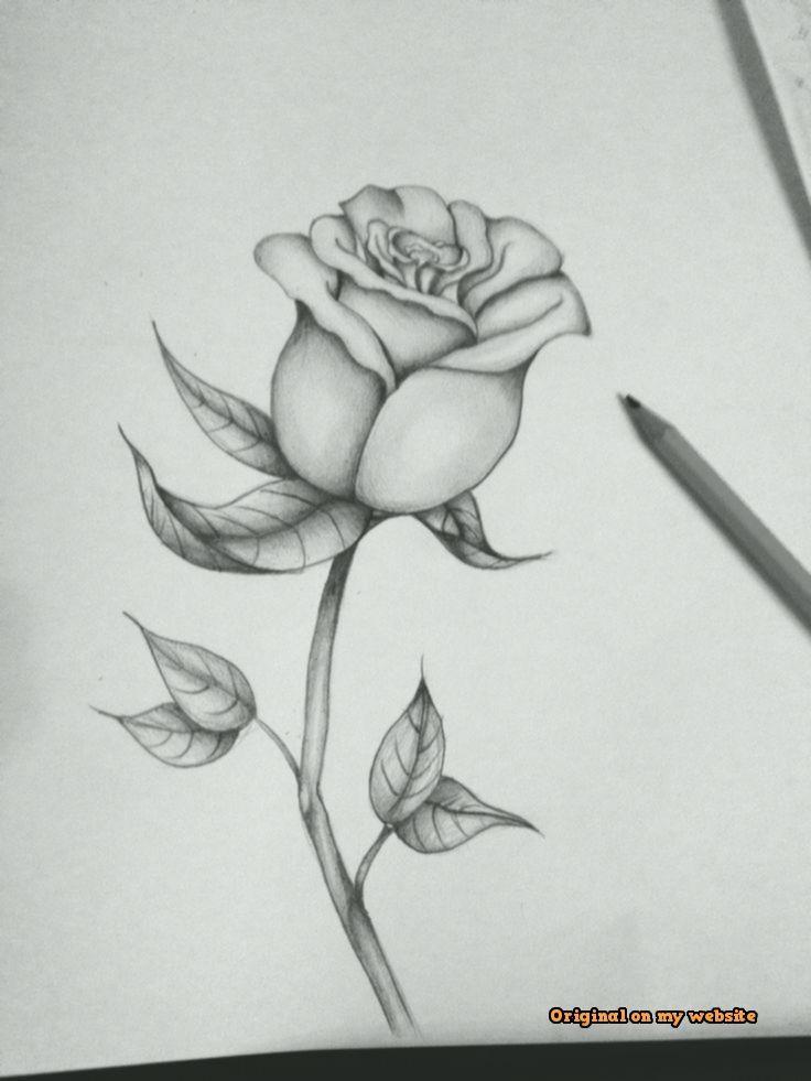 Art Sketches Ideas First Attempt At A Black And Grey Rose 2020 Cizilecek Seyler Cizim Fikirleri Cizimler