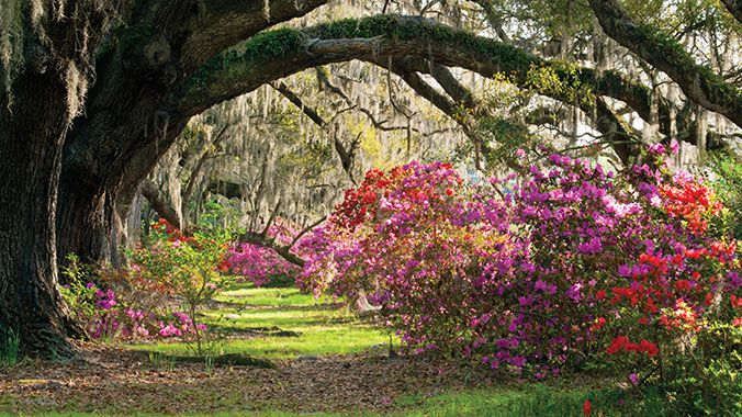 796da89ee26dd615f5a612f6c526d5db - Magnolia Plantation And Gardens South Carolina