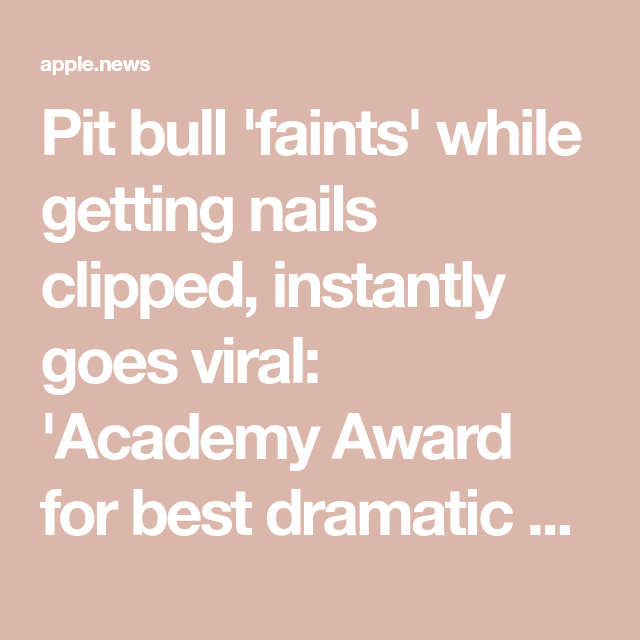 Pit bull 'faints' while getting nails clipped, instantly goes viral: 'Academy Award for best dramatic performance' — Fox News #academyaward