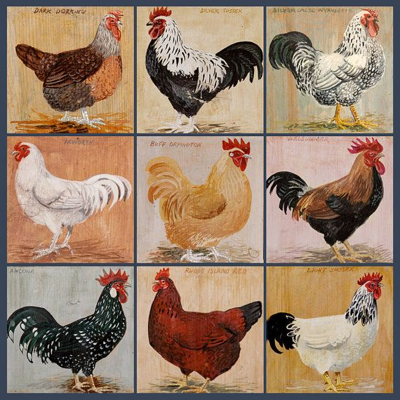Nine Rare Breed Chickens III: Limited edition print by Artfortyeight // Jonathan Carter Art48