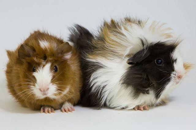Pin on Adopt & love them!!
