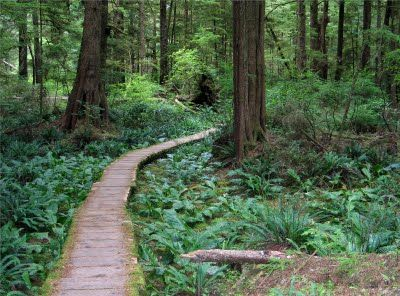 the ozette loop is probably one of the easiest 9 mile loops you can