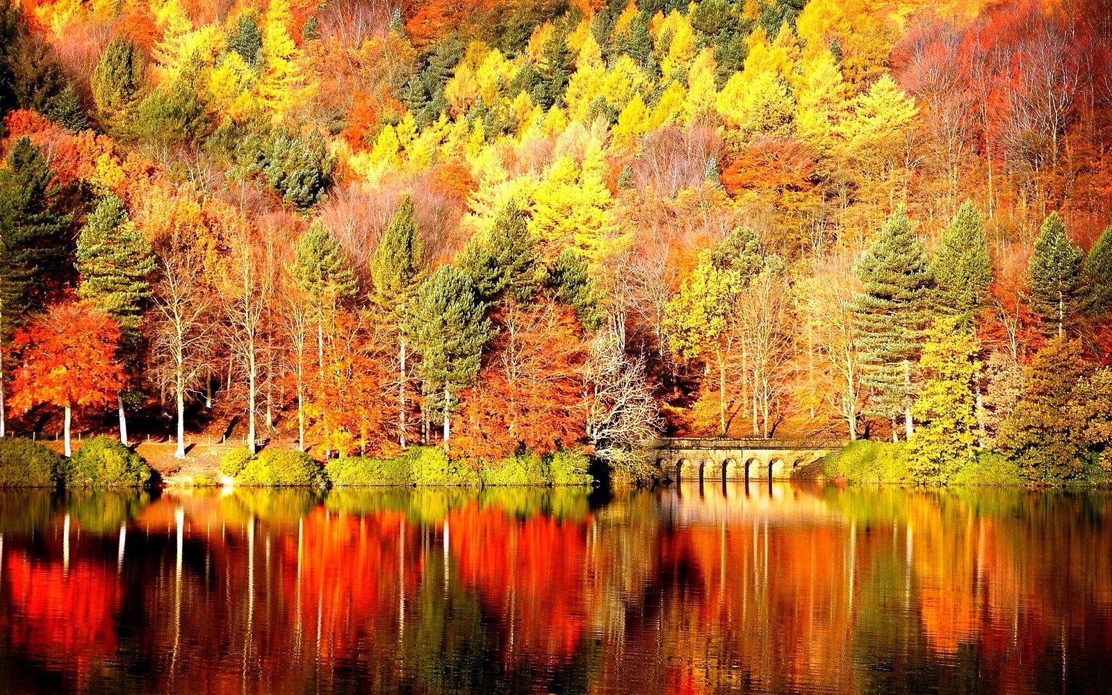 Pin By B T Haynes On Outdoor Fall Desktop Backgrounds Free Fall Wallpaper Desktop Wallpaper Fall