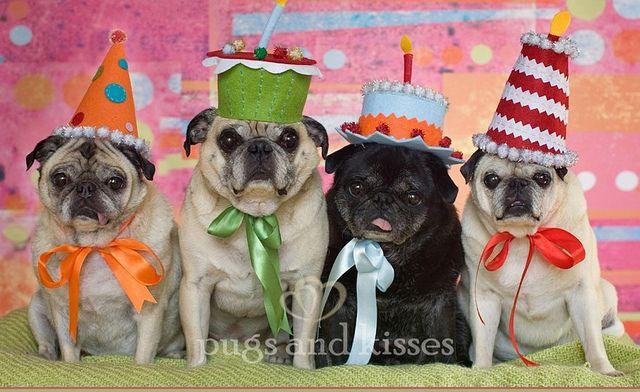 Happy Birthday Pugs Kisses Happy Birthday Pug Birthday Pug