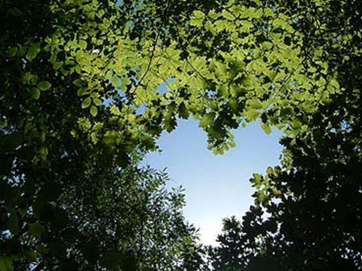 Coração na floresta