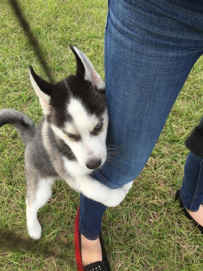 Resultado de imagen para dogs husky, When you are going to leave
