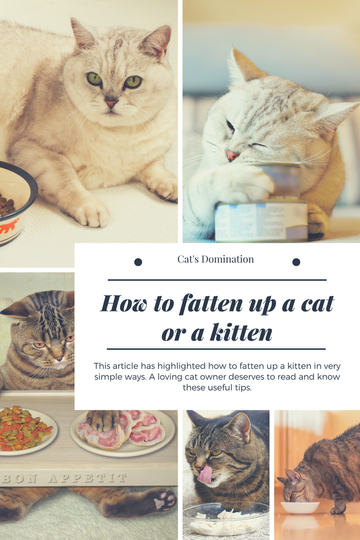 This Article Has Highlighted How To Fatten Up A Kitten In Very Simple Ways A Loving Cat Owner Deserves To Read And Know These Kitten Cat Care Tips Cat Owners