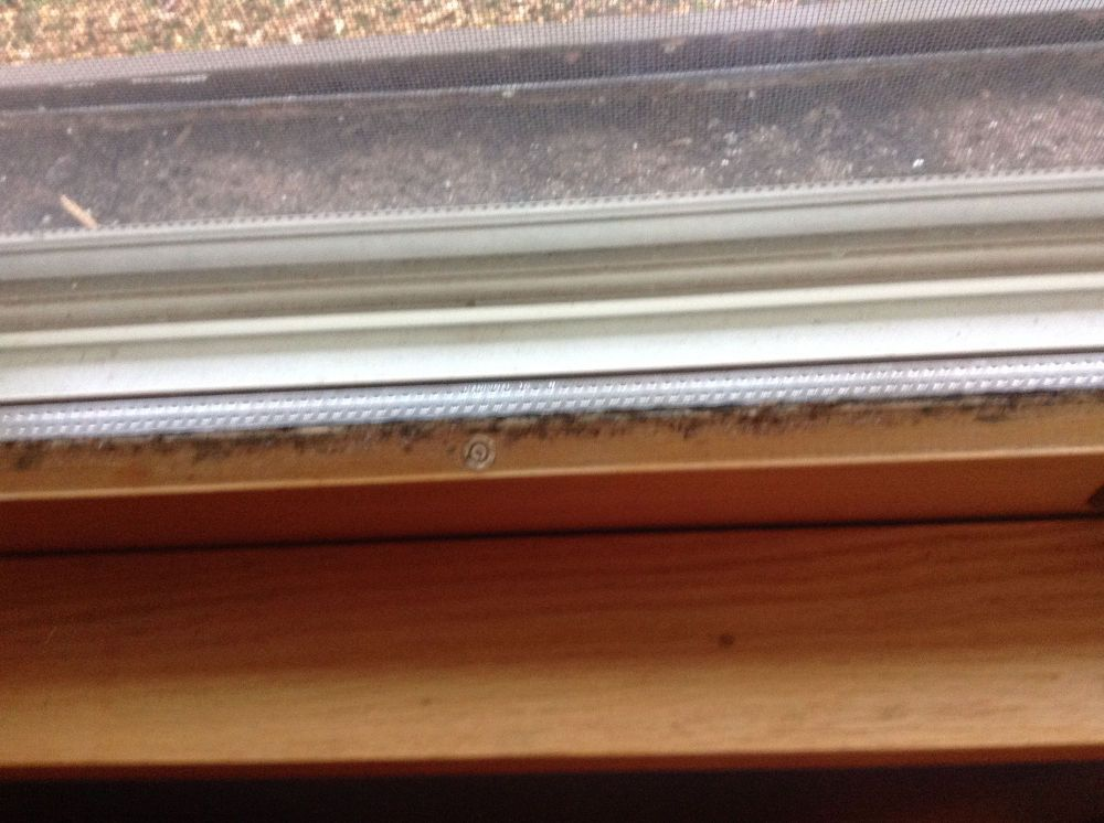 How do i remove mold from window sashes and frames sash