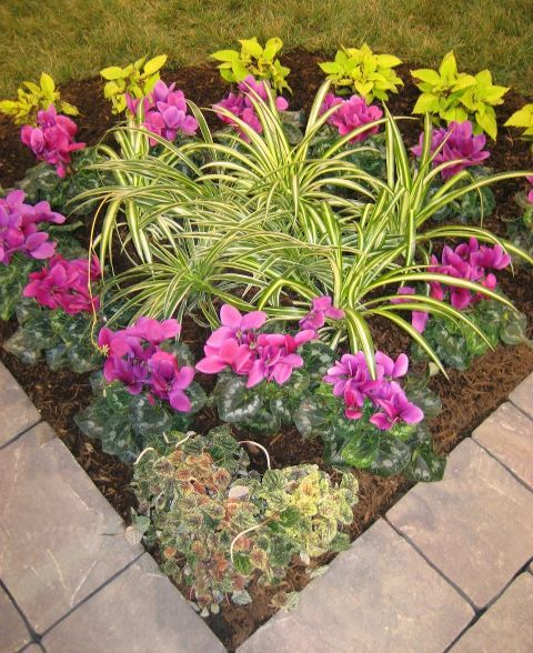 33 Beautiful Flower Beds Adding Bright Centerpieces To: Flower Bed Planted With Coleus, Cyclamen, Spiders, And