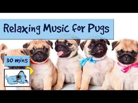 8 Hour Playlist To Relax Dogs And Puppies Music For Dogs Of All