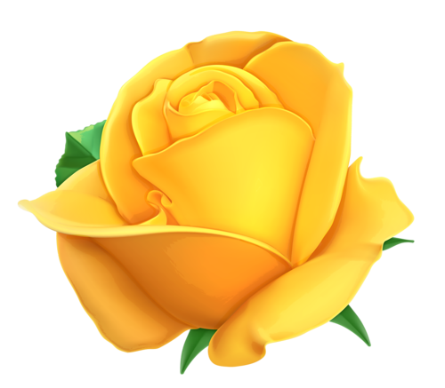 Tea Rose Clipart Black And White: Fleurs, Tube, Flowers, Png » «