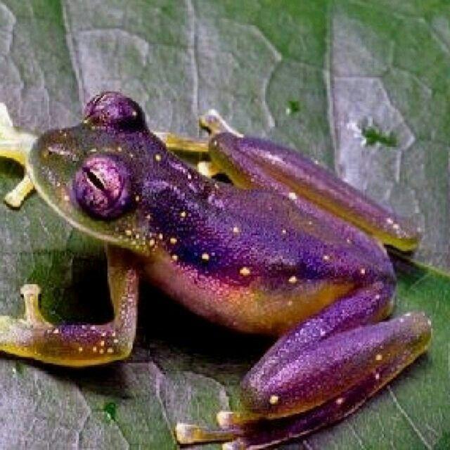 Amazing Frog: FROGZ...Caz I Luvem....