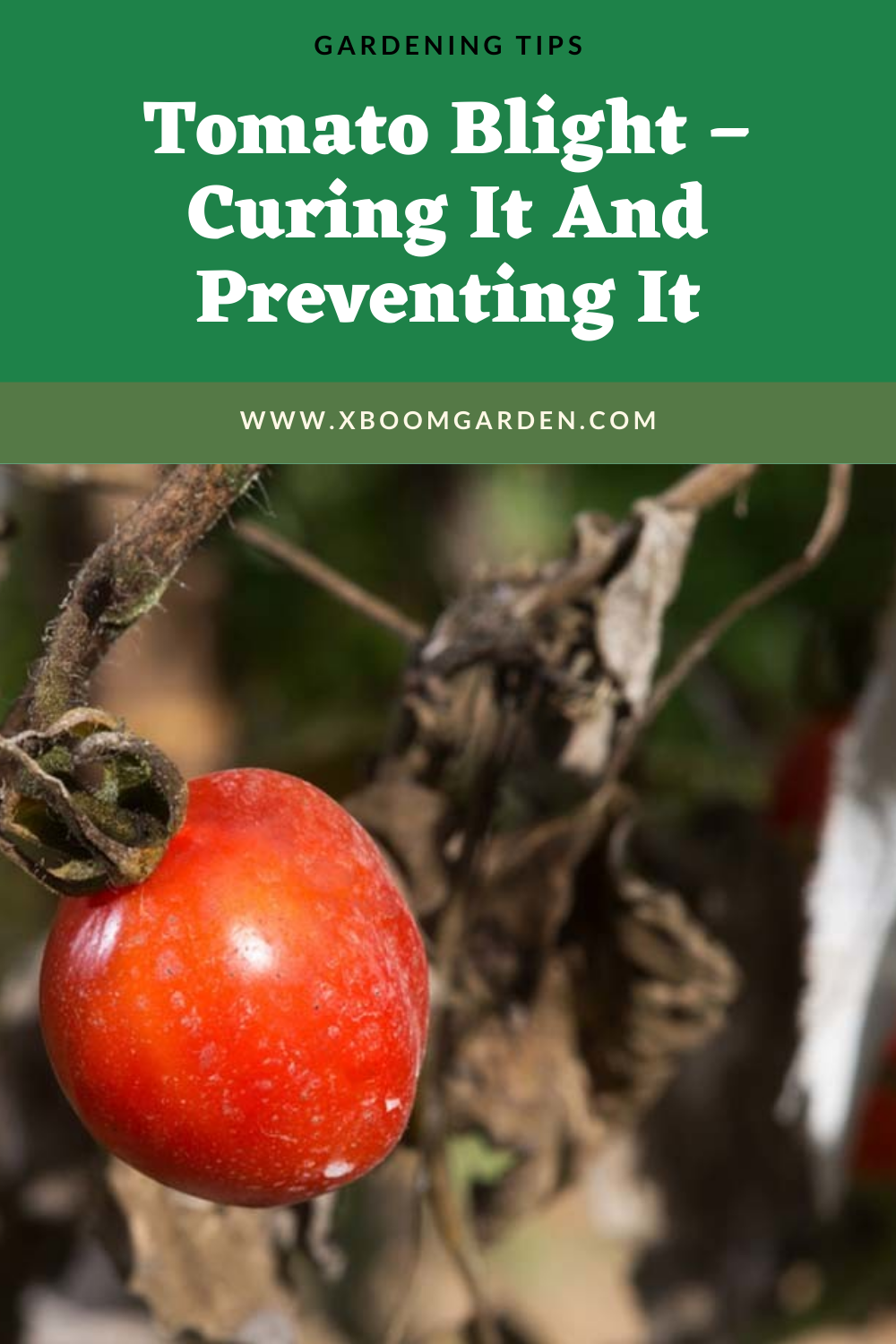 79740a8b8ca188dfd42a4c09b034c950 - How To Get Rid Of Late Blight On Tomatoes
