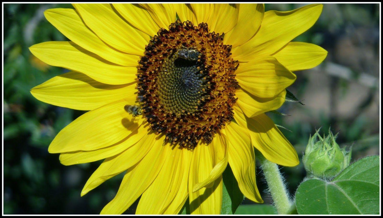la fame delle api
