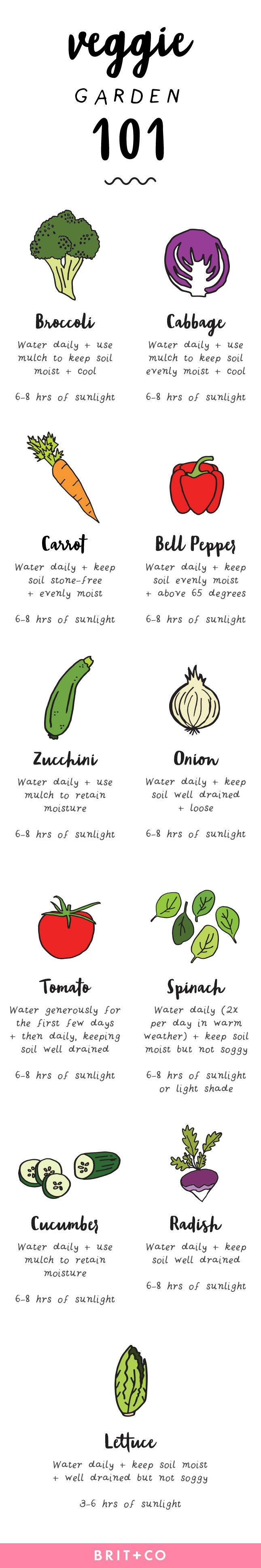 check out this 101 guide for how to plant a veggie garden