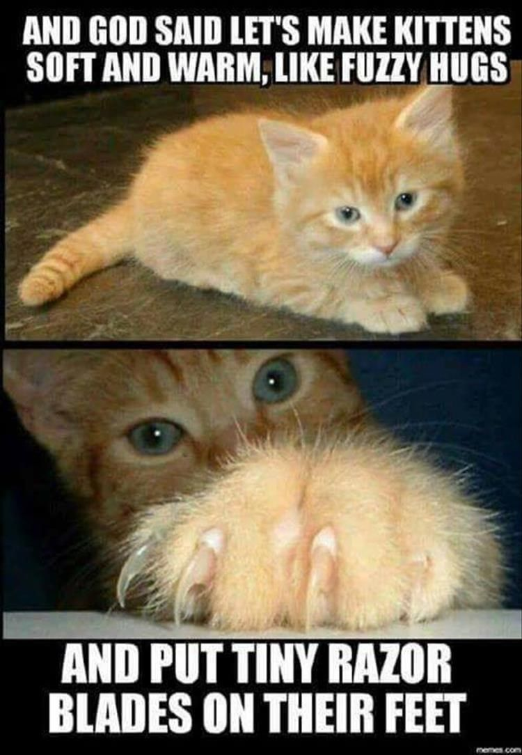 It S Caturday Time For Your Daily Treat Of Cat Memes Funny Animal Pictures Warrior Cat Memes Funny Animals