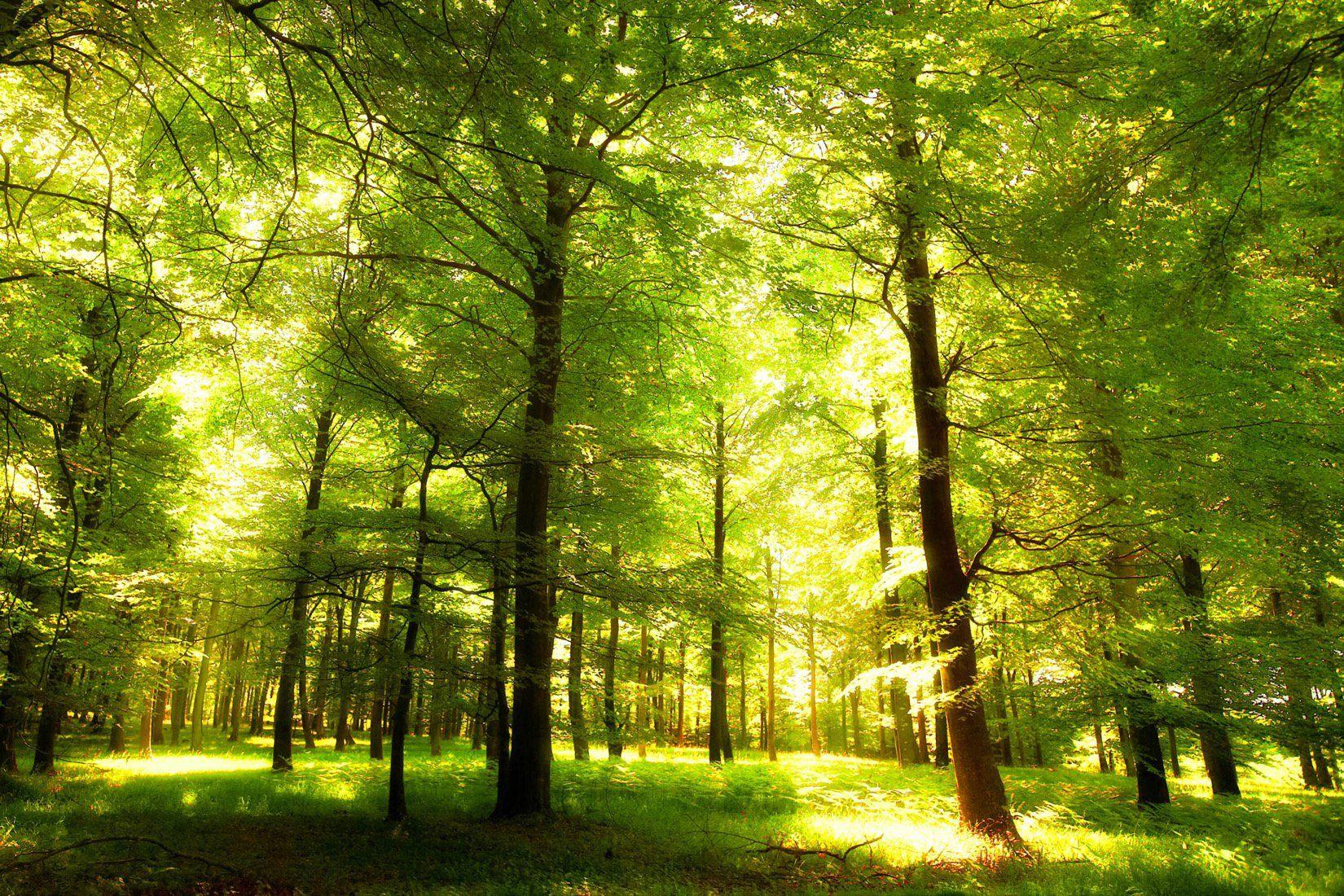 Afbeeldingsresultaat Voor Pinterest Zoeken Green Wallpaper