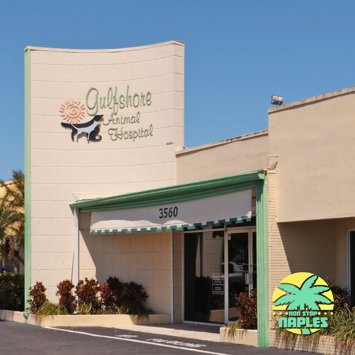Do your pets have a good vet gulfshore animal hospital