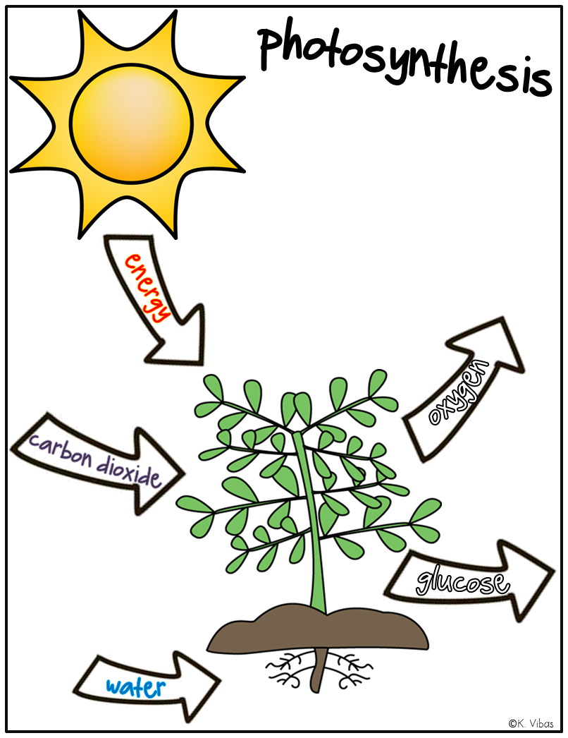 Plants Vocabulary, Activities, Games and Assessments | Middle school ...