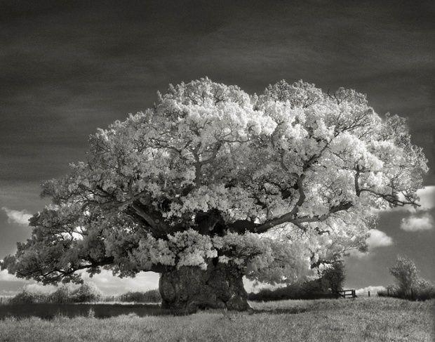 Das Sind Die Spektakularsten Baume Der Welt Riesenmammutbaum Baum Fotografie Sequoia Nationalpark