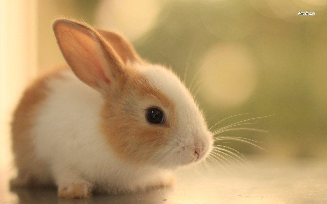 Cute Bunny Photos Rabbit Pictures