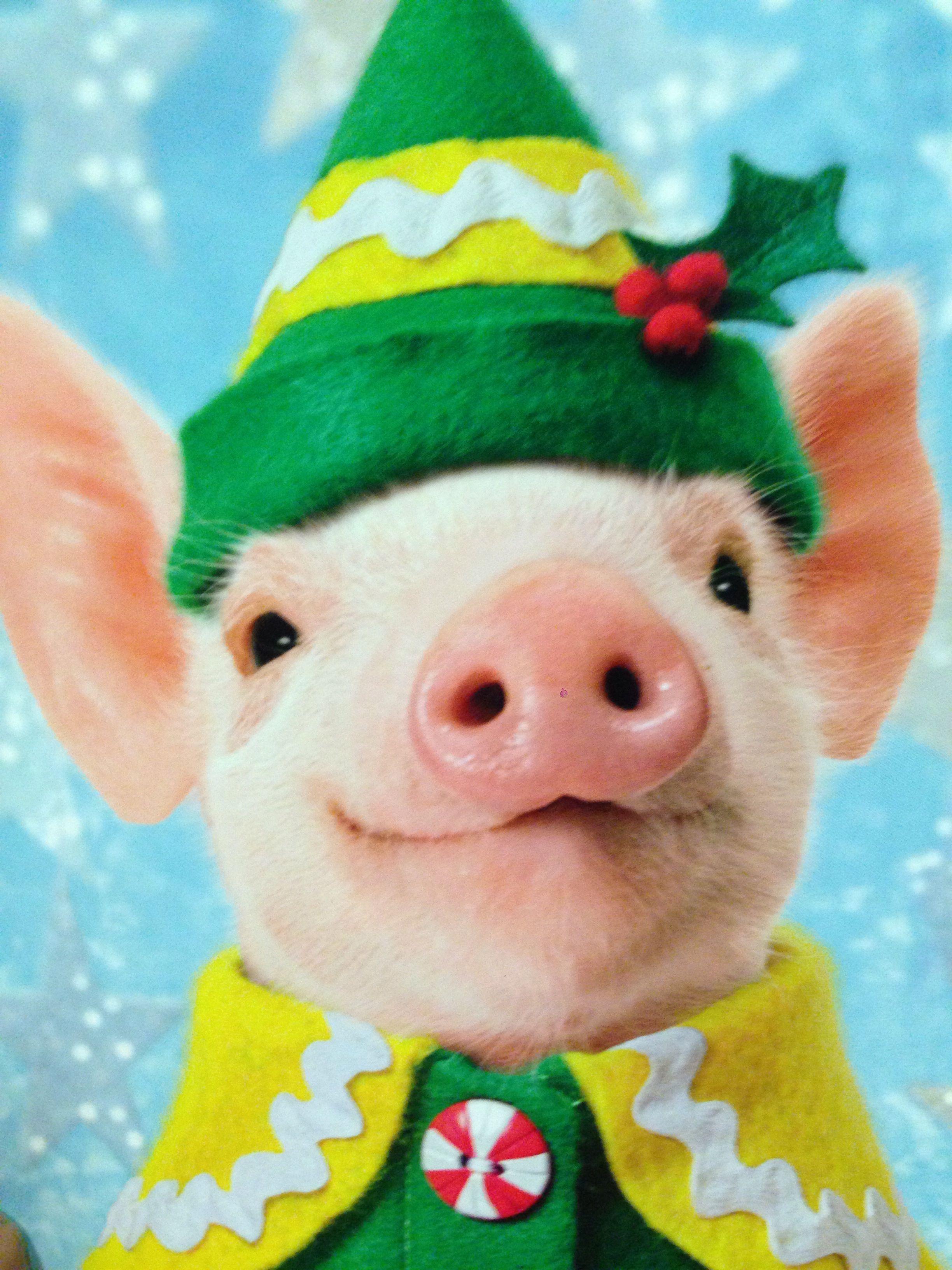 Christmas piggy! I ️Pigs Baby pigs, Cute pigs, Cute