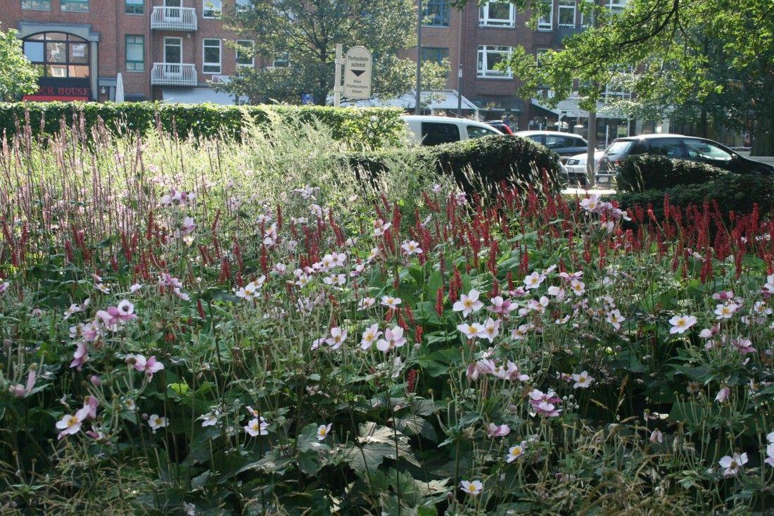 Gro e stra e ahrensburg p l a n t s garten pflanzen for Pflanzengestaltung garten