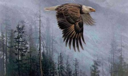 bald eagle pictures to print - Google Search