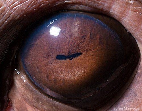 Incredible Macro Photography Close Up Shots Of Animal Eyes Macro - 24 detailed close ups of animal eyes