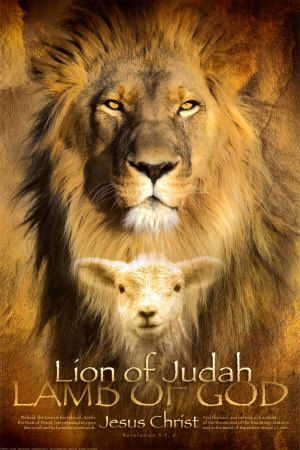 The lion and the lamb...;) | Lion of judah, Lion and lamb, Lion of judah jesus