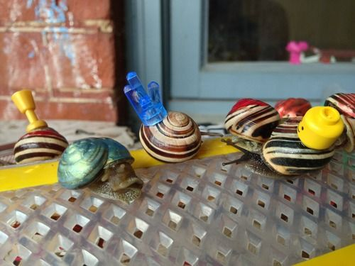 snail races  at 353 #snail #garden #summer2013