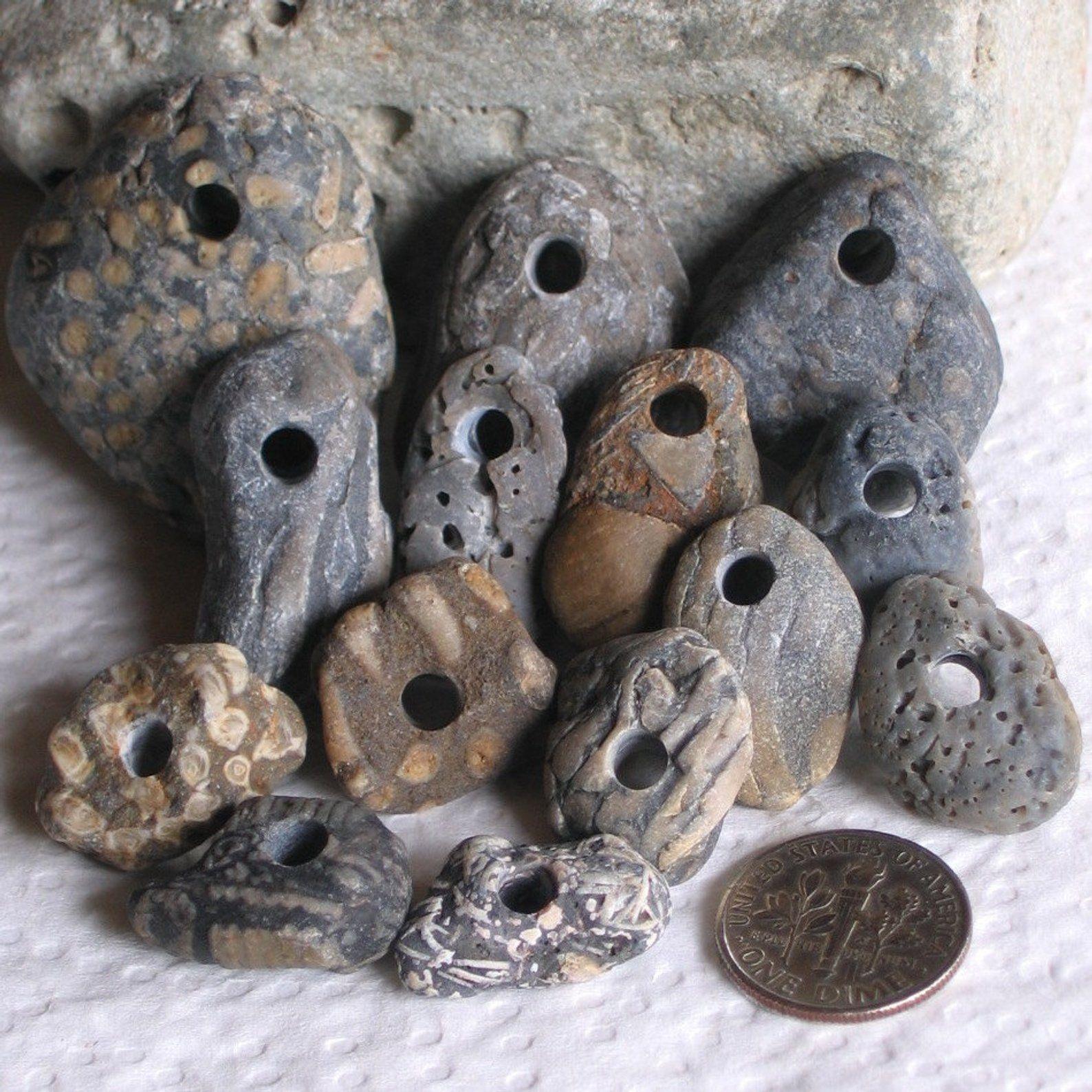 Natural Art Surf Shop: 14 Natural Surf Tumbled Fossils Drilled 4mm Holes Supplies