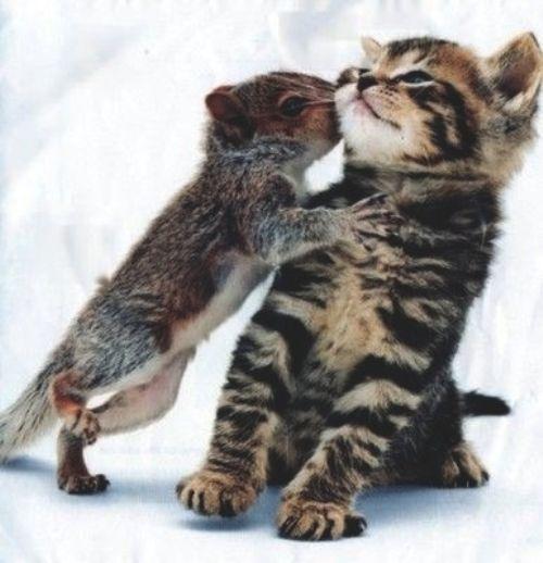 Kisses<3