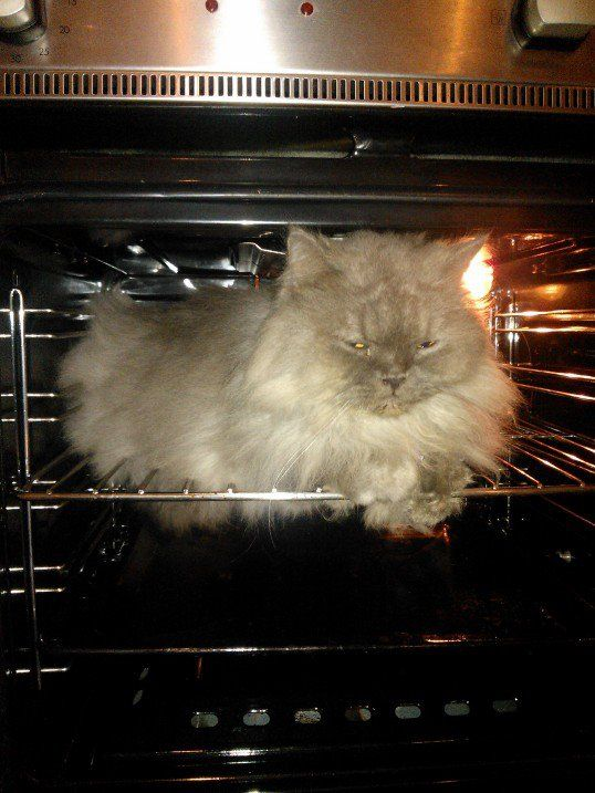 Popo...the true owner of my apartment. He just do whatever he wishes for, including occupying my oven.