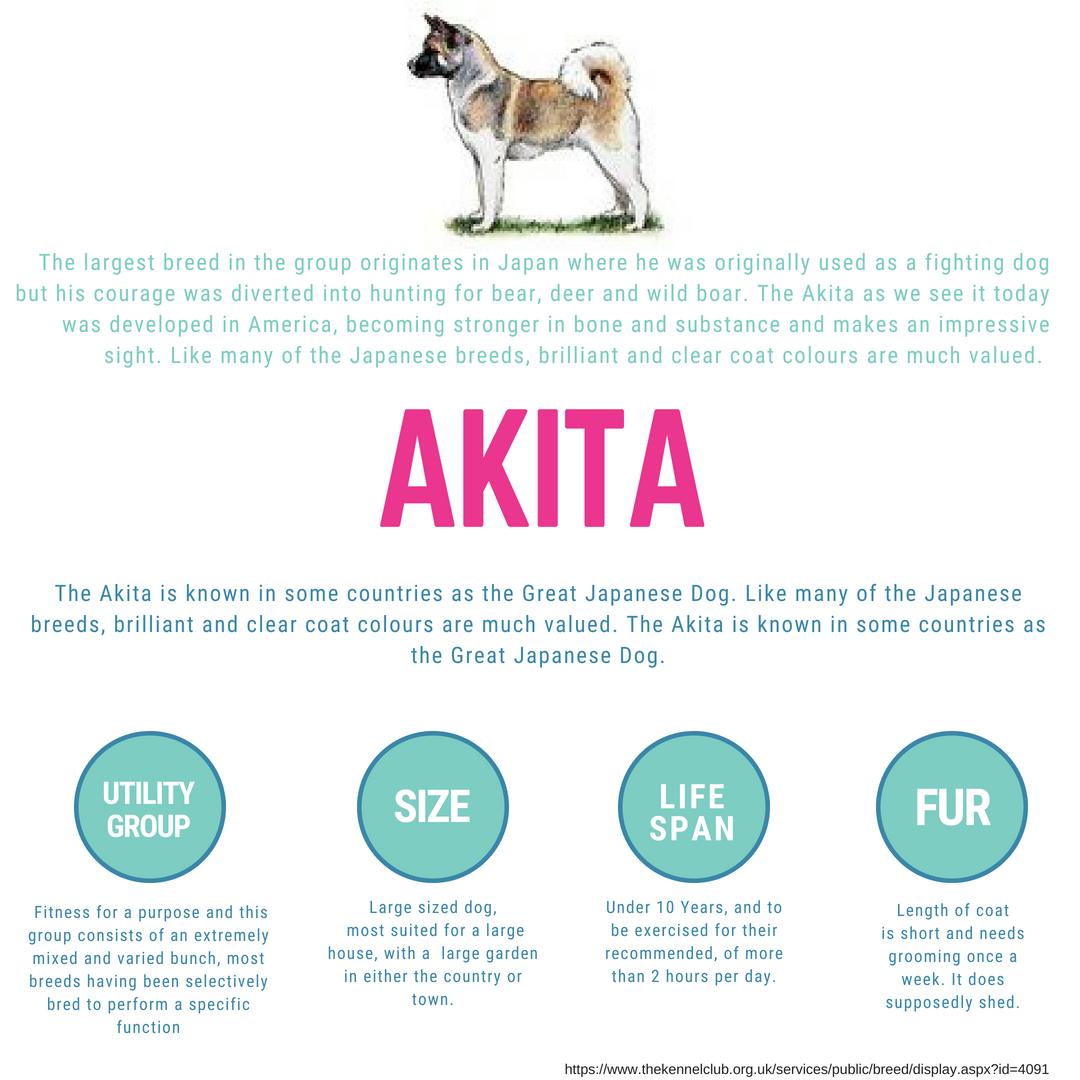 The Originally Great Japanese Dog Akita