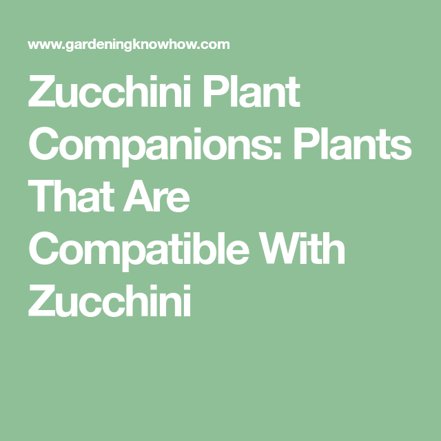 Zucchini Plant Companions: Plants That Are Compatible With ...