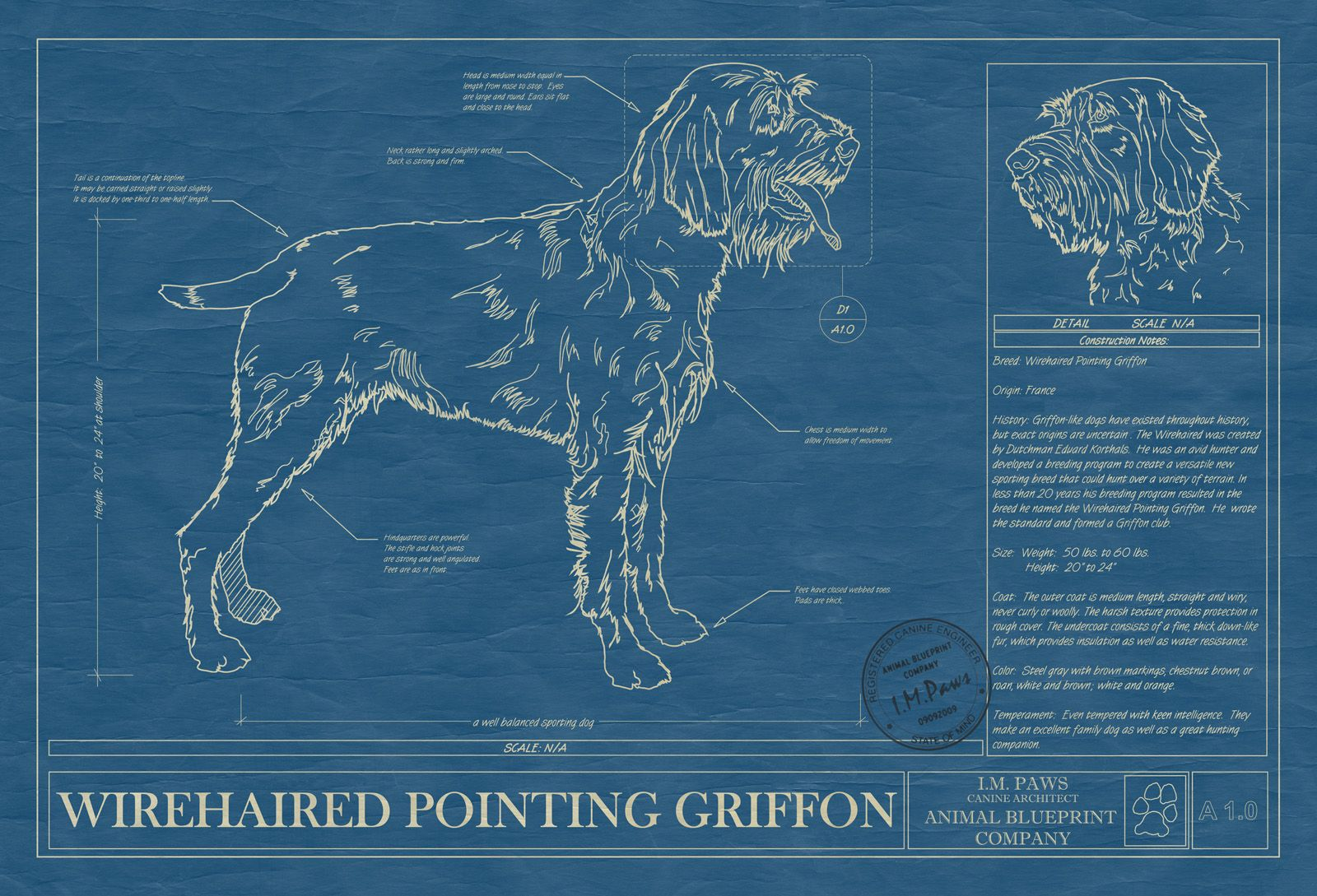 Wirehaired pointing griffon wirehaired pointing griffon unique rendered in the original format of a working blueprint this unique wall art features the malvernweather Images