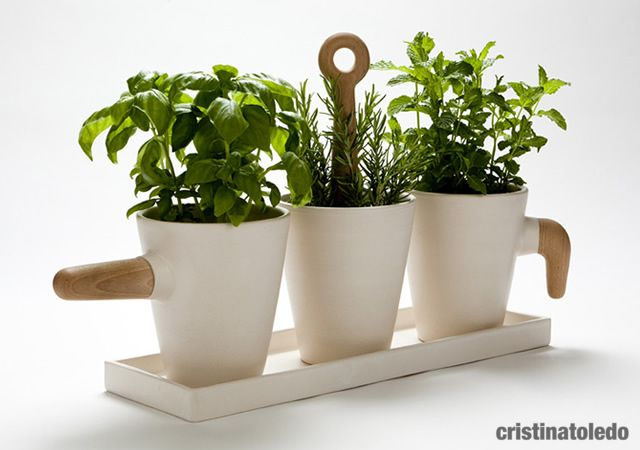 Kitchen herb in pot