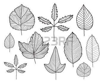 hojas de otoño dibujo: Conjunto de vector de línea doodle