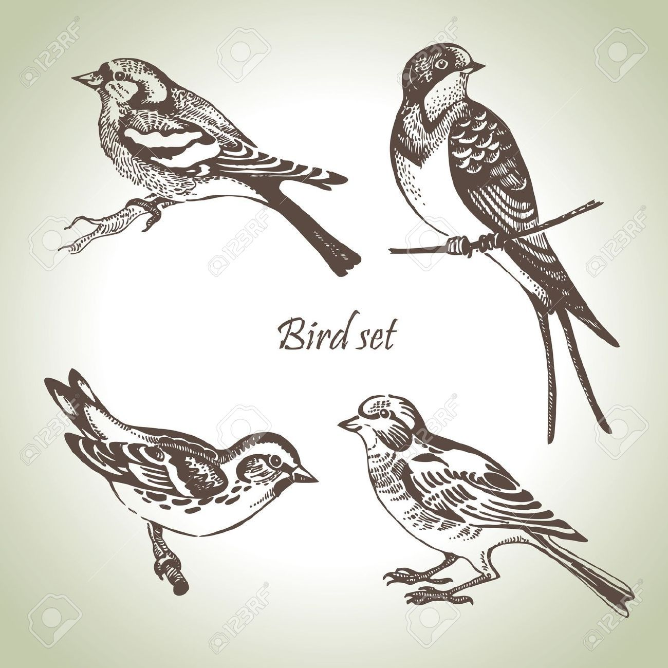 Middle East Sparrow Design Tattoo