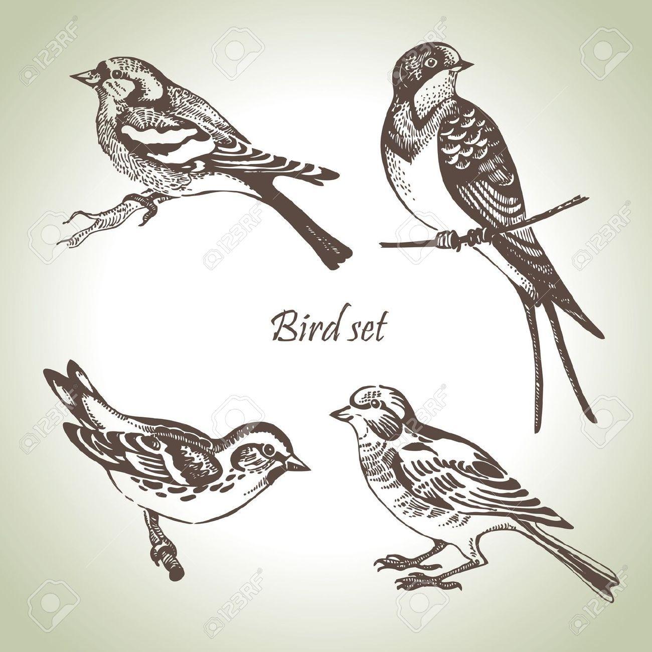 Summer beach scene vector stock vector colourbox - Bird Set Hand Drawn Illustration Stock Vector On Colourbox