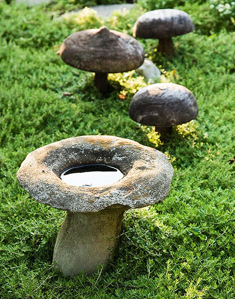 stone mushrooms
