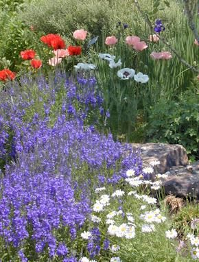 High Alude Gardening Tips When You Start At 5 280 Feet Diffe Options Become Available If Live Way Up Ll Be Looking For Alpine Plants