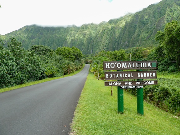 Hiking Hoomaluhia Botanical Gardens in Oahu in 2020 Oahu
