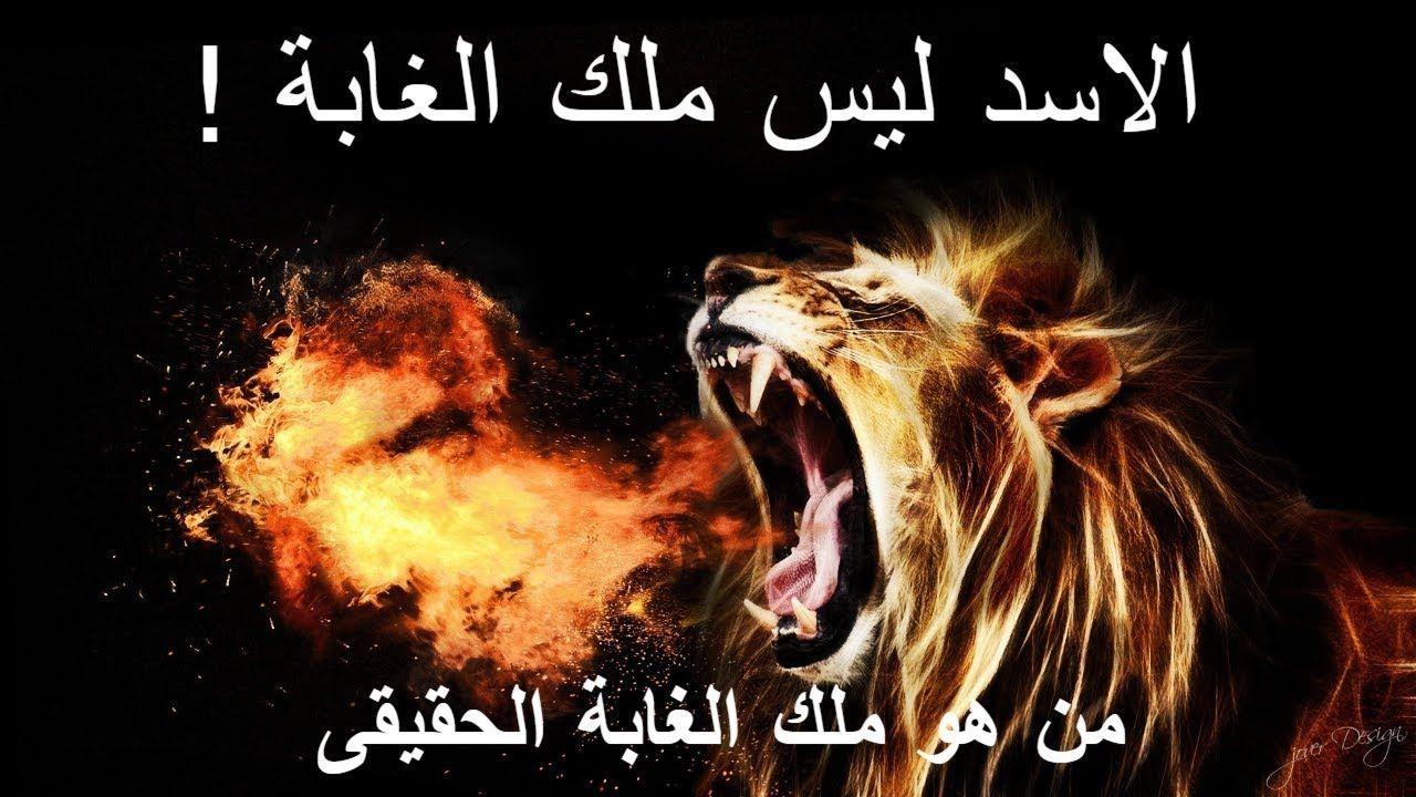 الاسد ملك الغابة مجرد خرافة لا تمس الواقع بصلة Lions Dont Lose Sleep Taekwondo Quotes Fairy Tales