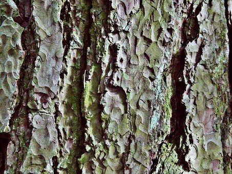 Arbre, L'Écorce, Log, Nature