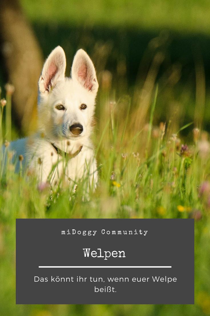 Hilfe Mein Welpe Beisst Welpen Hundchen Training Und Hunde